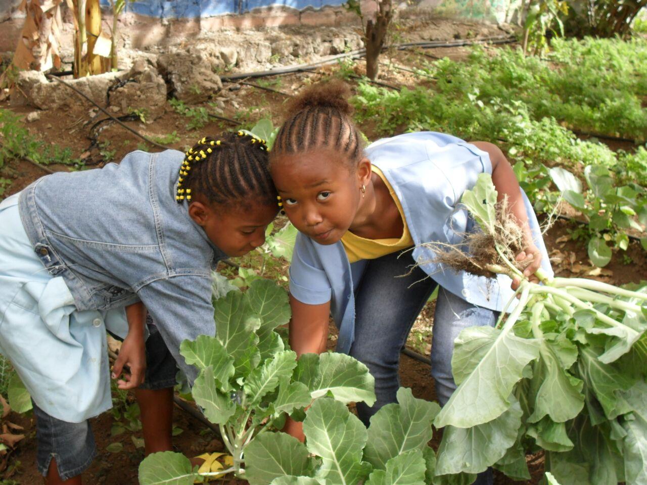 Refeições escolares inscritas na Lei Caboverdiana